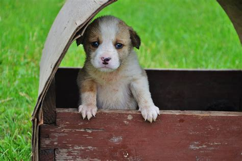 abandoned puppy abandoned puppy by marculescusorin on deviantart