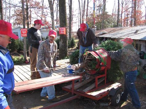 35 best nc choose cut christmas trees images on