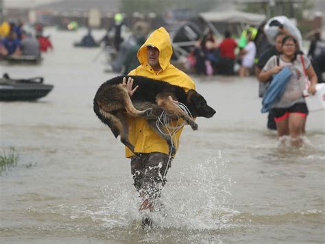 hurricane harvey dogs everything need to about hurricane harvey american kennel club