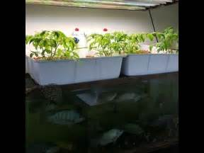 hydroponics growing system  fish youtube