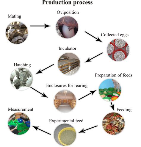 the flowchart of chocolate process chocolate processing