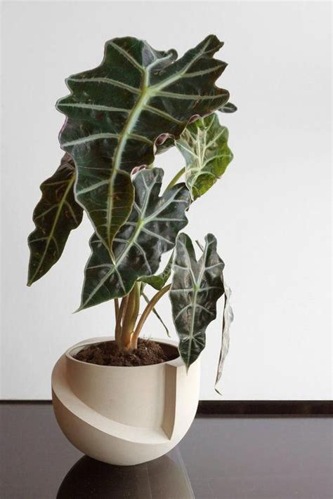 tabletop ceramic planter sculptural  modern planter