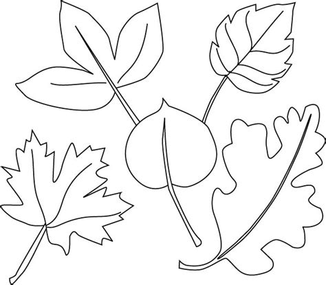 coloring pages of different leaves different leaves and maple leaf page kids play color 10267