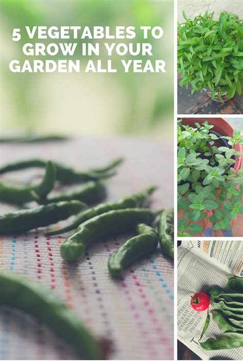 vegetables you can grow in pots gardening five vegetables you can grow in pots all