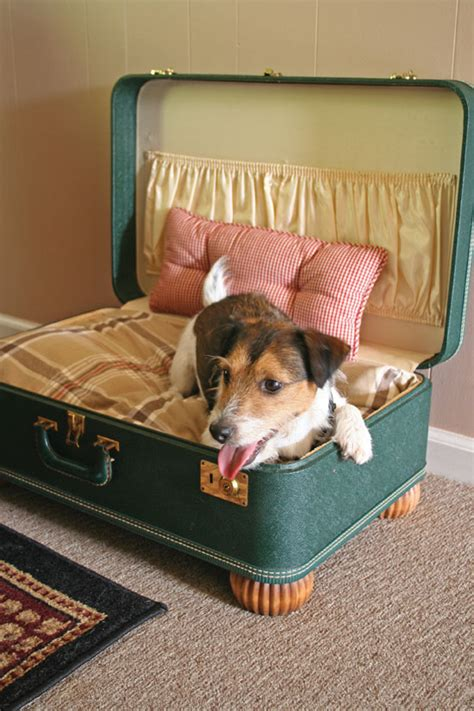purr fect diy cat  dog bed ideas bite sized biggie