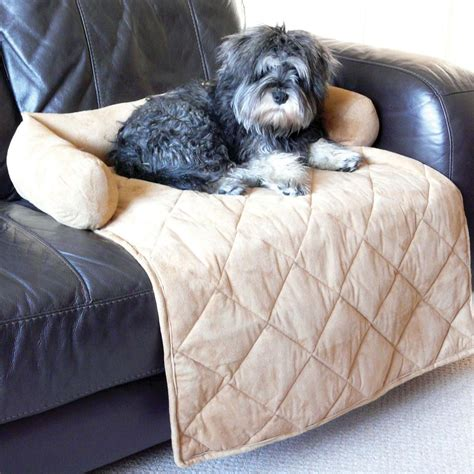 small dog r for couch sofa beds for dogs small dog sofa with design hd gallery