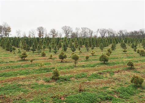 wonderland christmas tree farm only in arkansas
