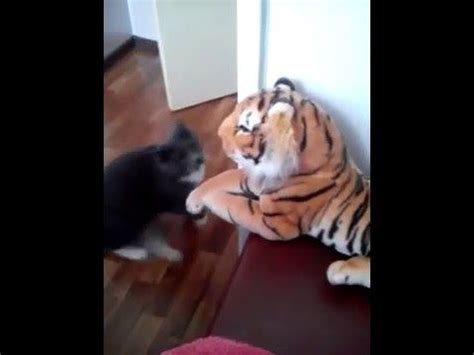 cat vs fight best 25 cats fighting ideas on cat fight gif patty cake cats and