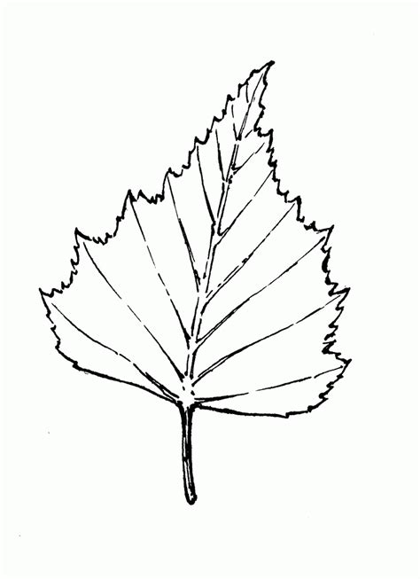 leaf coloring pages pdf birch leaf outline images pictures becuo coloring home