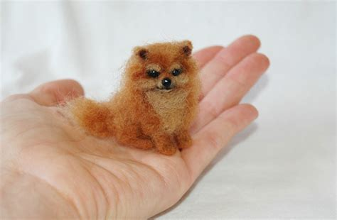 miniature pomeranian breeders puppy dogs mini pomeranian puppie