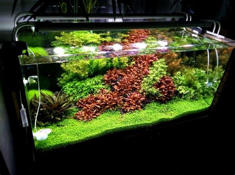 aquascape co2 warum co2 im aquarium so wichtig ist aquascaping berlin