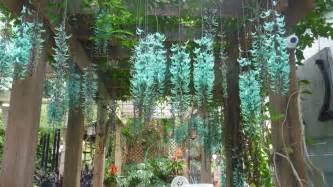 Vining Plants For Trellis Strongylodon Macrobotrys Green Jade Vine