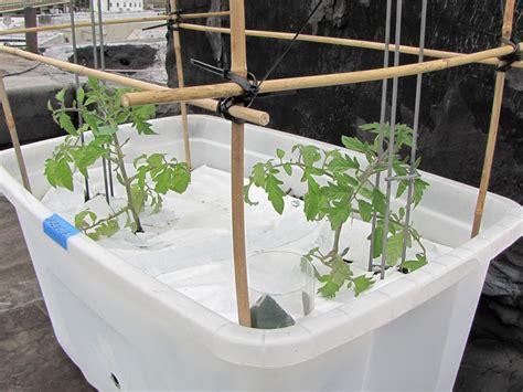 How Often Water Vegetable Garden Bucolic Bushwick Rooftop Debut