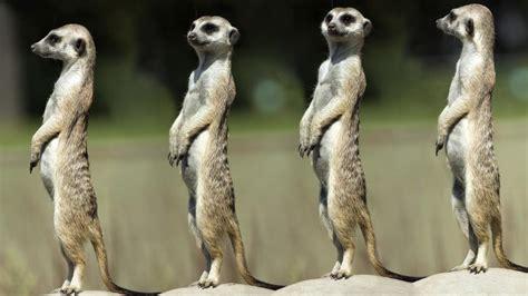 imagenes de animales nuevas especies ocho especies animales donde mandan las hembras
