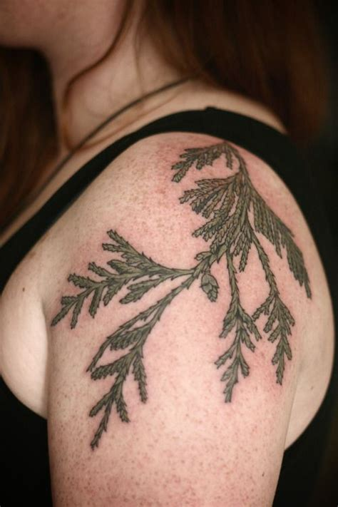 cedar tree tattoo 78 best images about cedar tree on