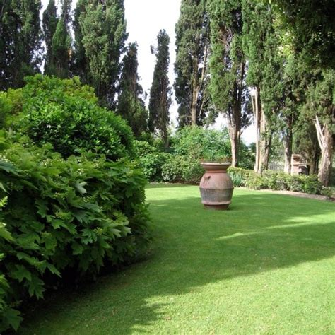 tuscan t bone olive garden 17 best images about tuscan garden on gardens trees and garden ideas
