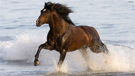 wallpaper for desktop running horse horse running on the beach okay wallpaper