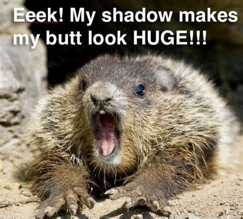 groundhog day zodiac sign best 25 quotes ideas on