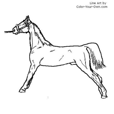 american saddlebred horse coloring pages of a coloring pages