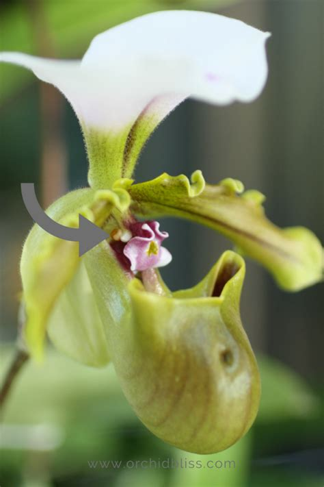 facts about orchids orchid facts for the trivia lover in you orchid bliss