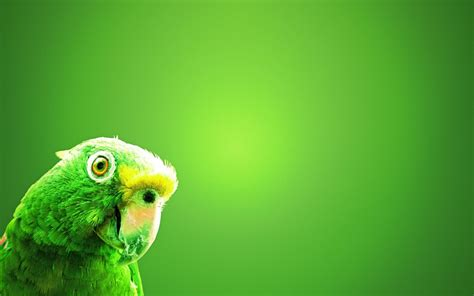 imagenes verdes full hd periquito verde hd fondoswiki com