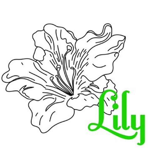 flowers of the month coloring pages flower coloring sheets a z lily coloring pages at