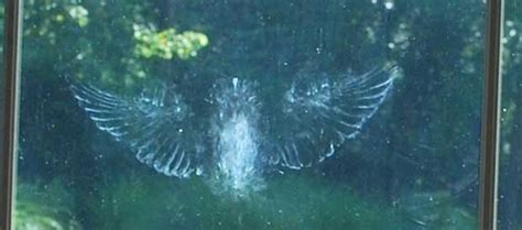 prevent birds flying into windows british bird lovers
