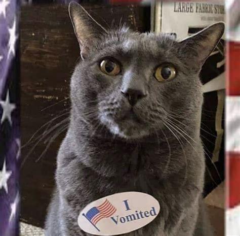 vomited  voted sticker cat meme shut