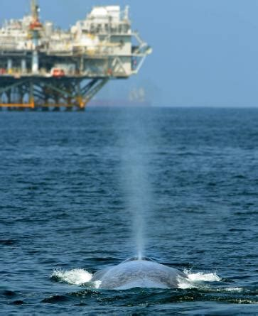 La Fitness Long Beach Pch - blue whale appearance