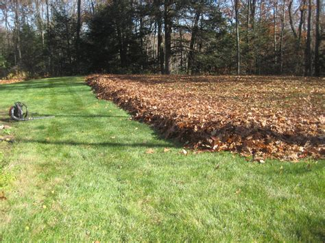 jersey leaf clean up leaf blowing service in