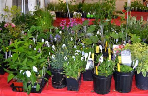 master gardeners grow plant sale profits university