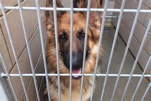 home for rescue rescue seeks forever home for who was returned just