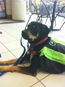 service dogs colorado heiditown on krfc 88 9 fm what do to in colorado february 10 12 2012