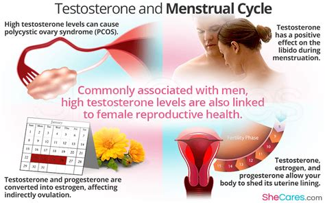 Low Testosterone And Mood Swings testosterone and menstrual cycle shecares