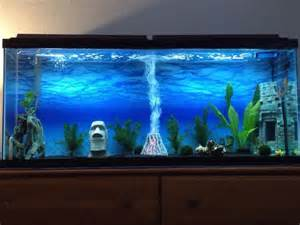 Aquarium Decoration Ideas Freshwater 17 Best Ideas About 55 Gallon Aquarium On Pinterest 55