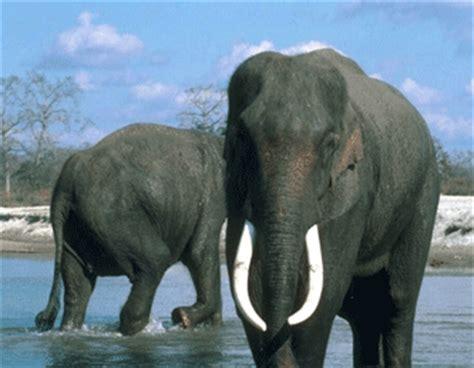le elefant animale animale 2
