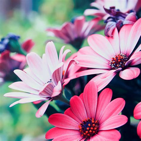 30 very pleasing collection of flower photos naldz graphics