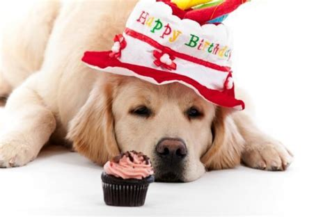 happy birthday pictures with dogs happy birthday quotes for dogs quotesgram