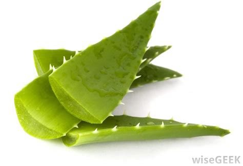 aloe vera for dogs what are the uses of aloe vera for dogs with pictures