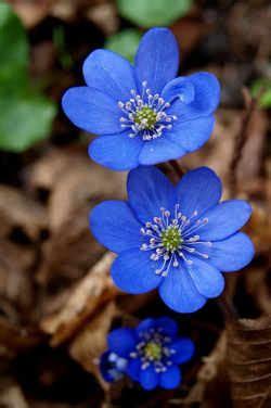 imagenes de flores reales para imprimir im 225 genes de flores hermosas y bonitas rosas exoticas de