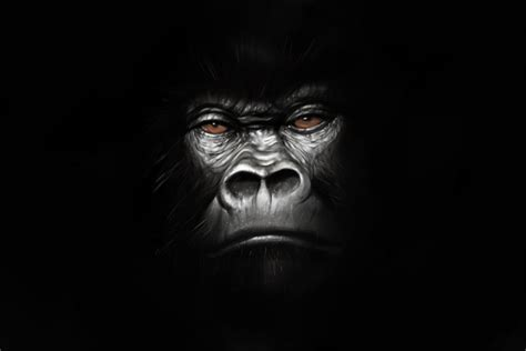 gorilla by jmont on deviantart