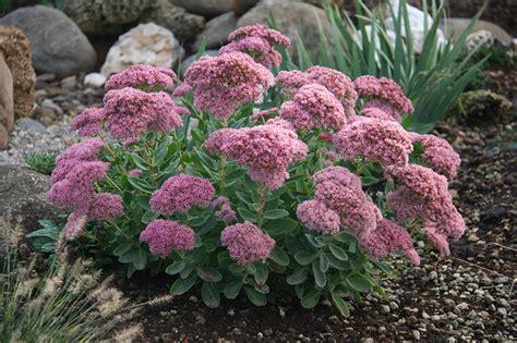 piante da fiore estive perenni vivai rulli garden marsciano