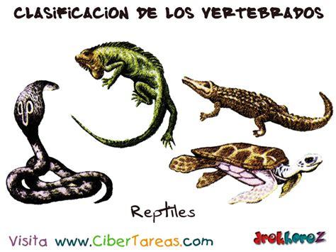 imagenes de animales vertebrados reptiles los reptiles clasificaci 243 n de los vertebrados cibertareas
