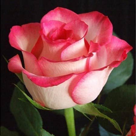 Beautiful Flower Dan Custom Nama top 30 cele mai frumoase flori din lume buchete de flori pentru ocazii speciale