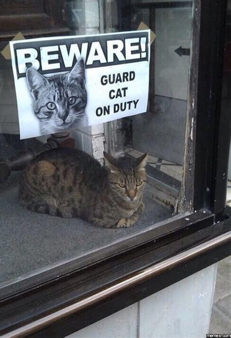 cats     house guarding   purrtacular