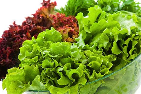 types of lettuce lettuce a new spin