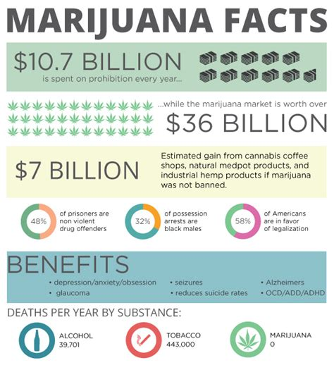 Marijuana Detox Reddit by Marijuana Facts Infographic