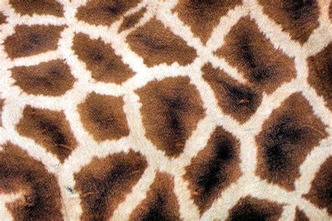 giraffe pattern image giraffe pattern 11464 3648x2432 px hdwallsource com