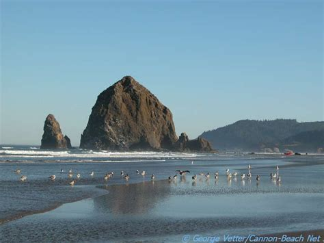 haystack rock cannon beach net