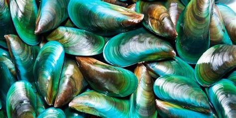 Kerang Hijau air laut tercemar ahok takut makan kerang hijau merdeka